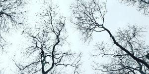 İnci Ağrısı | Sedef Erik